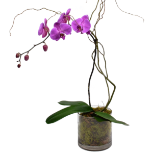 Elegant Single Stem Orchid