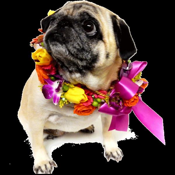 Precious' Floral Pet Collar