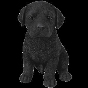 Black-Labrador-Puppy