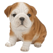 Bulldog Puppy Statue