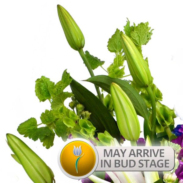 Bud Stage Notice