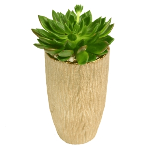 Shining Succulent