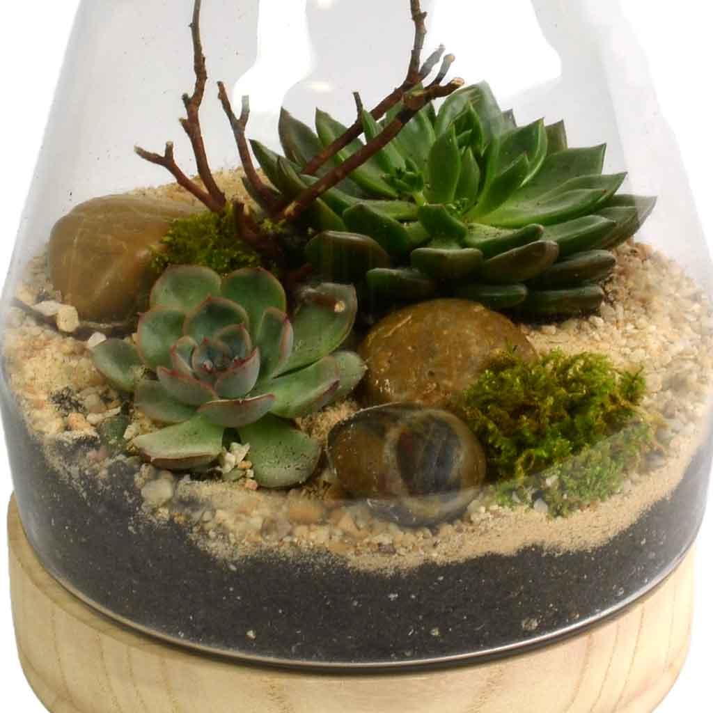 Succulent Terrarium - Terrarium