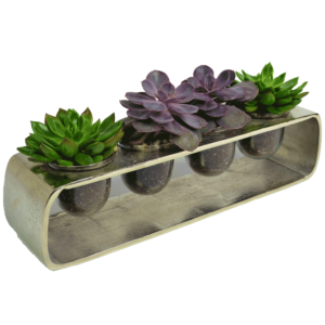 Succulents in Style