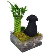 Black Labrador Puppy Garden
