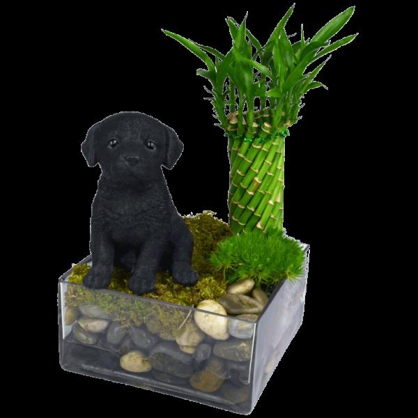 Black-Labrador-Puppy-Garden