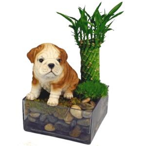 Bulldog-Puppy-Garden