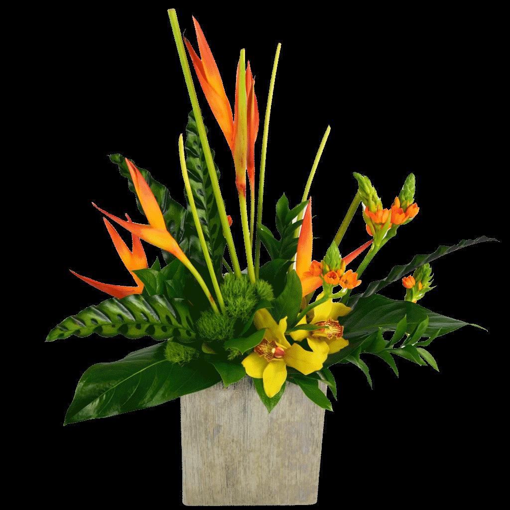 Tropical flowers karins fflorist voted best florist in america tropical treasure izmirmasajfo Gallery