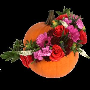 Pumpkin Spectacular