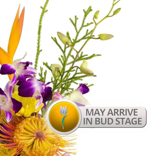 Bud Stage