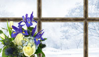 Winter Flower icon