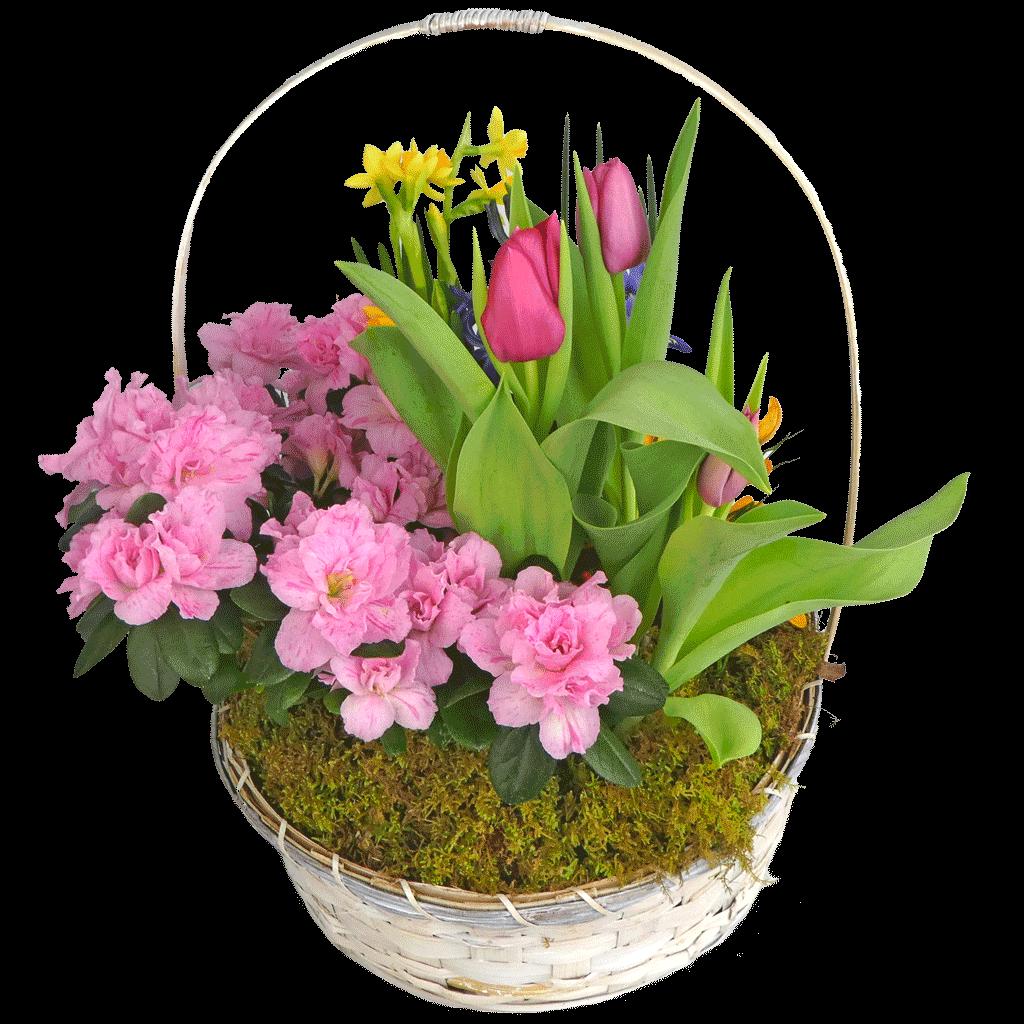 Spring's Garden