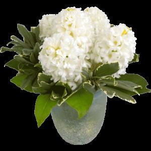 White Hyacinth Bouquet