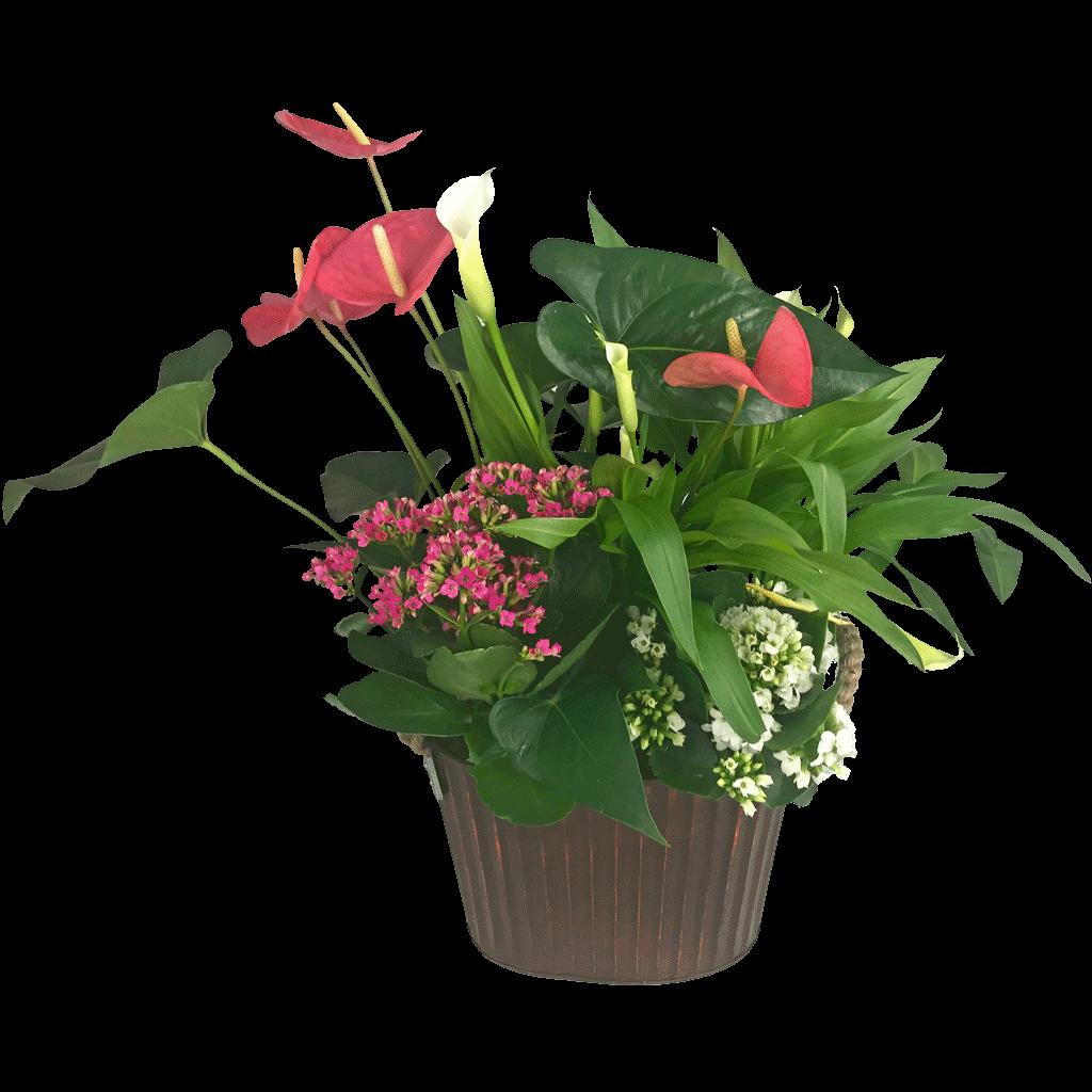 Blooming Mixed Garden