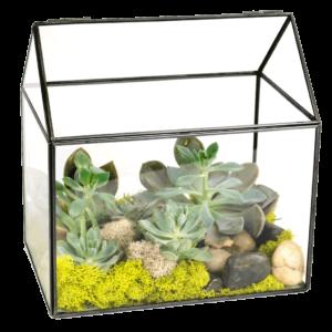 Succulent House Terrarium